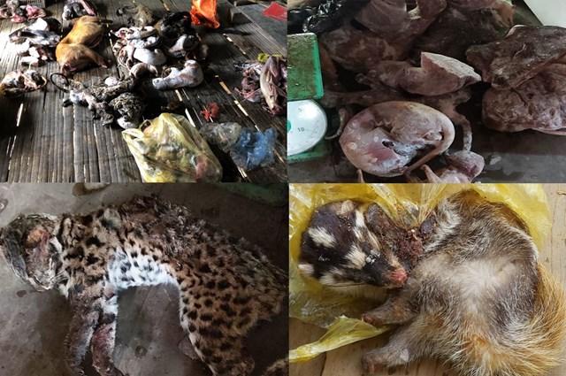 Thanh Hóa: Bắt giữ hai đối tượng tàng trữ 49 cá thể động vật quý hiếm - 1