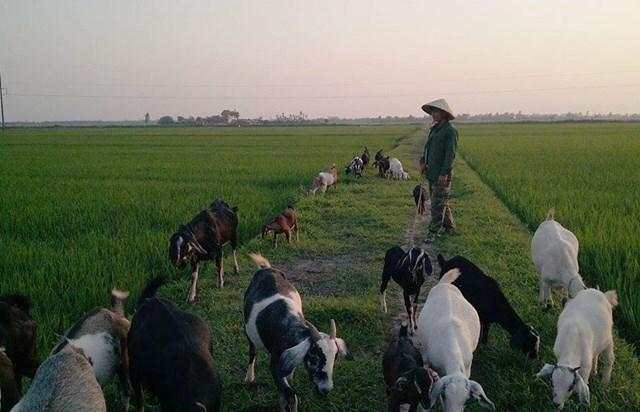 Phát triển đàn gia súc