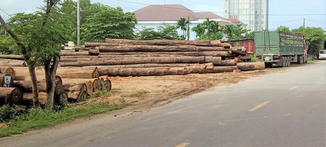 Quảng Nam: Dân lo lắng vì bãi tập kết gỗ mọc 'bất ngờ' trong khu dân cư