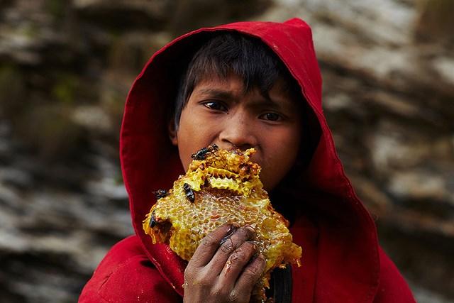 Lấy mật ong ở Nepal - 3