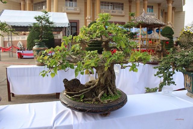 [ẢNH] Ngắm bonsai độc-lạ-đẹp bày bán dịp Tết - 1