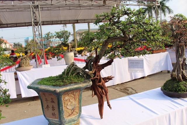 [ẢNH] Ngắm bonsai độc-lạ-đẹp bày bán dịp Tết - 7