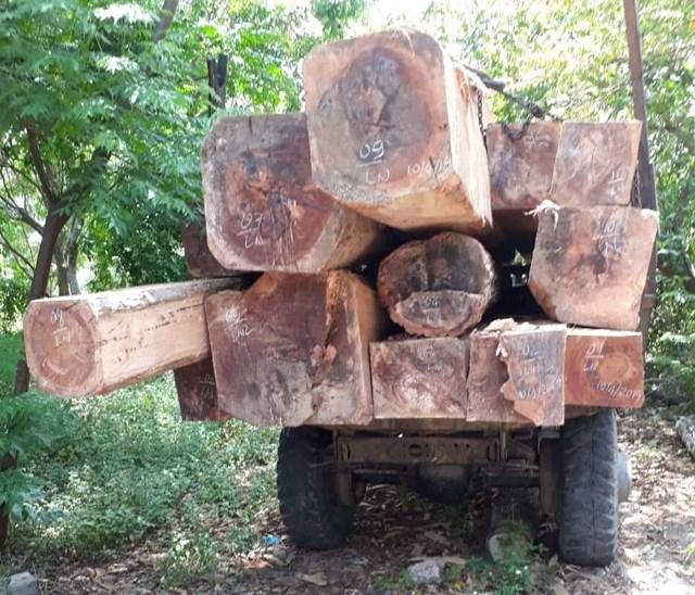 Gia Lai: Để mất rừng, hơn 50 cán bộ bị xử lý kỷ luật