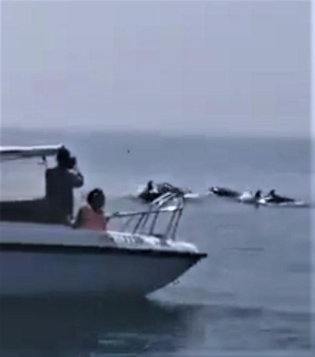 Xuất hiện đàn cá heo ở vùng biển Cửa Đại là một tín hiệu tích cực
