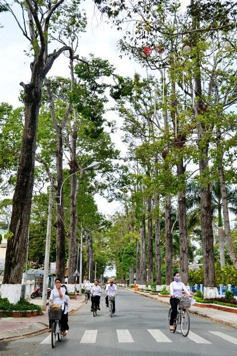 Thành phố trong rừng xanh