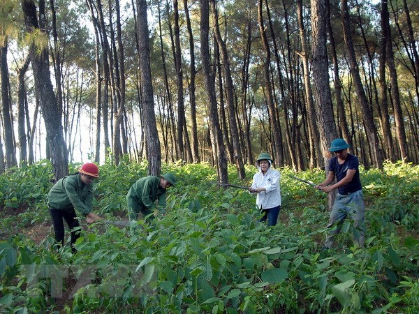 Kon Tum: Nỗ lực phủ xanh đất trống, đồi trọc