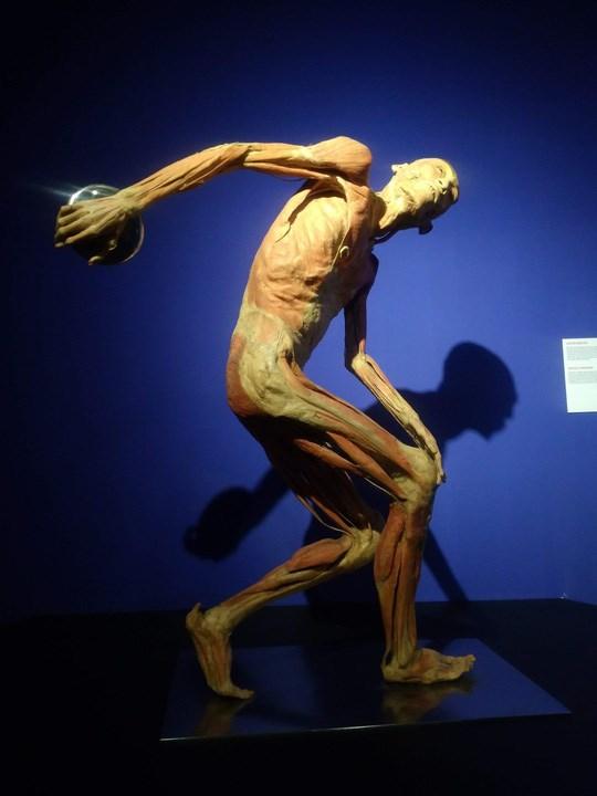 Đề nghị báo cáo về triển lãm cơ thể người - 1