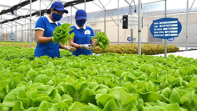 Thị xã Đông Triều (Quảng Ninh): Đang cán đích xây dựng Nông thôn mới - 1