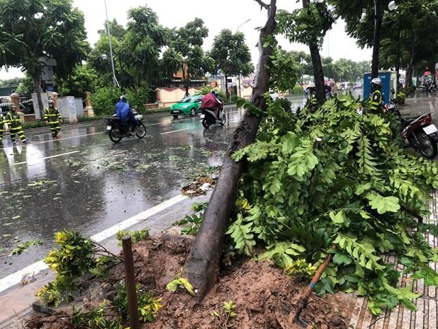 Hà Nội khẩn trương khắc phục ngập úng, đổ cây do bão số 3 - 1