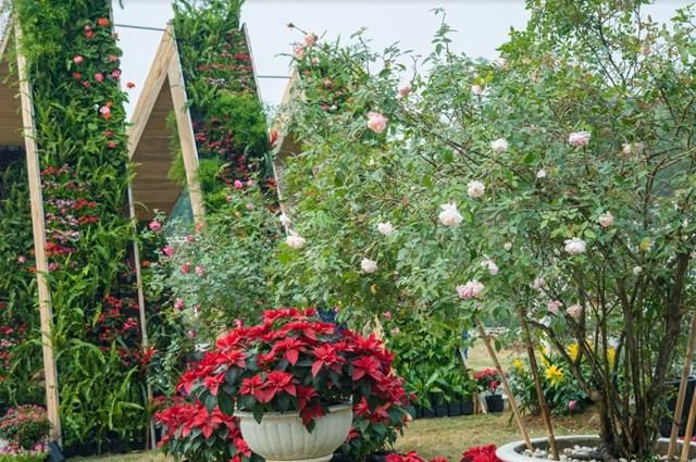 Lễ hội Hoa hồng - địa điểm 'check in' thú vị dịp Tết 2019 - 2