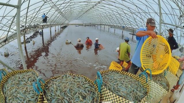 Thích ứng biến đổi khí hậu để phát triển thủy sản bền vững