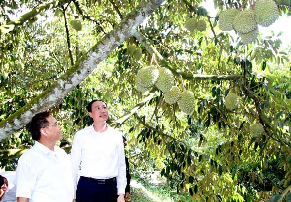 Chủ tịch UBTƯ Mặt trận Lào xây dựng đất nước tham quan các mô hình kinh tế - 3