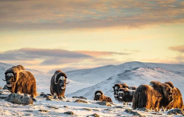 [ẢNH] Thiên nhiên hoang dã đẹp nhất tháng 12 - 3