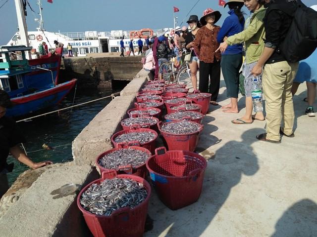 Ngư dân đảo Lý Sơn 'trúng đậm' cá cơm đầu năm mới