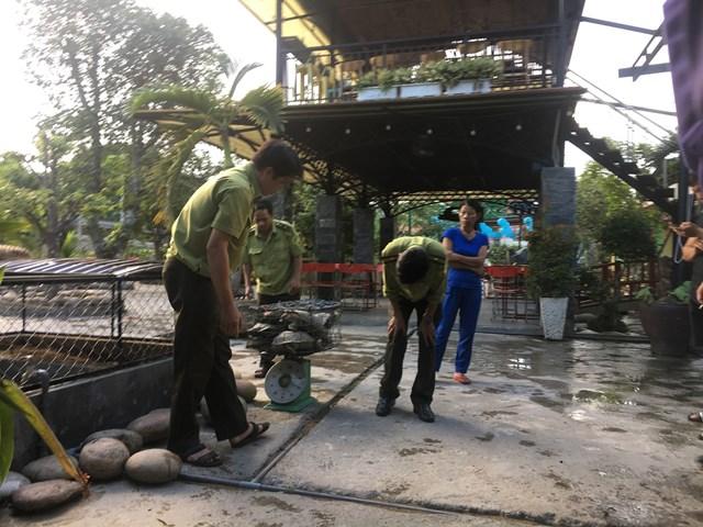 Quảng Nam: Tạm giữ 7 cá thể rùa nghi quý hiếm - 1