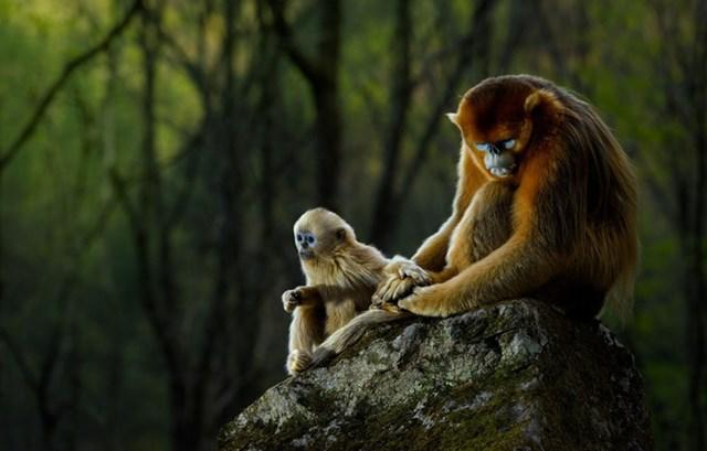 [ẢNH] Thiên nhiên hoang dã đẹp nhất tháng 12 - 8