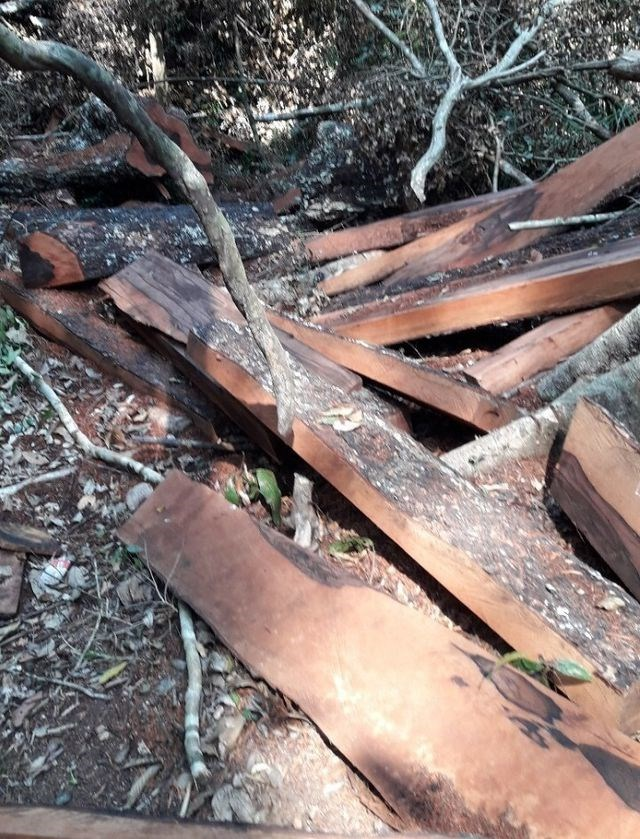 Vụ phá rừng Phong Nha – Kẻ Bàng: Khối lượng gỗ bị khai thác trái phép hơn 100 m3