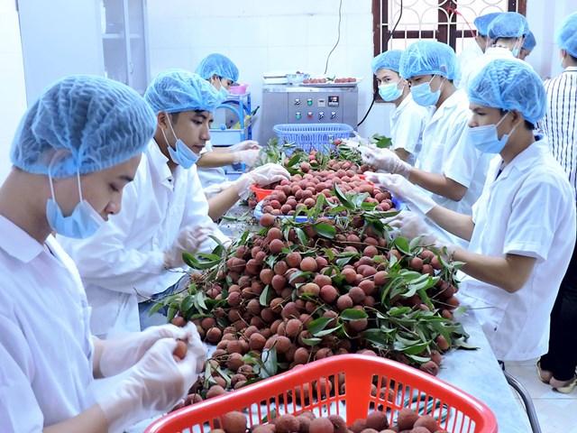 Xuất khẩu trái cây đối diện rào cản - 1