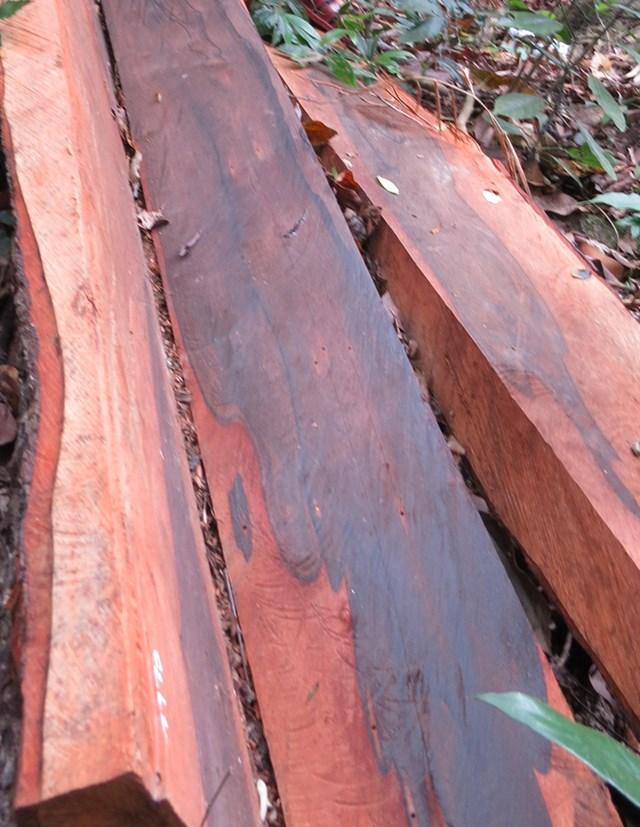Vụ phá rừng Phong Nha – Kẻ Bàng: Khối lượng gỗ bị khai thác trái phép hơn 100 m3 - 1
