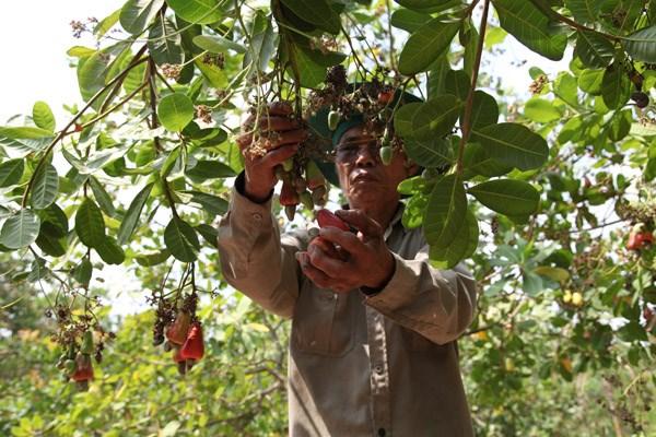 Huy động nội lực để giảm nghèo bền vững - Bài 2: Kỳ vọng giảm nghèo bền vững - 1