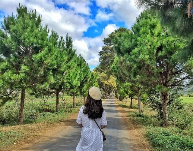 Phố núi Gia Lai hấp dẫn du khách - 2