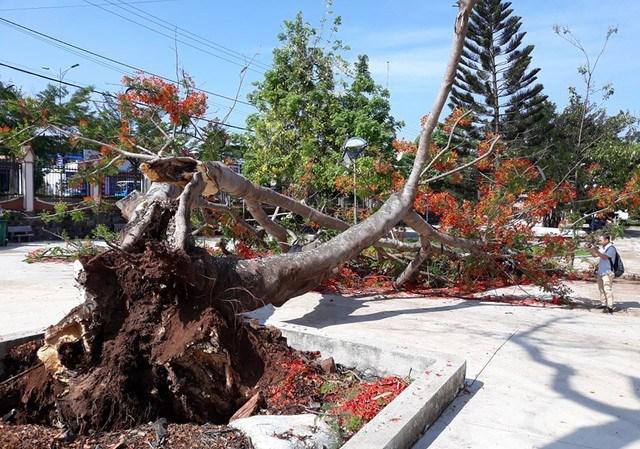 Quản lý cây xanh trong trường học: Vẫn khó đủ bề