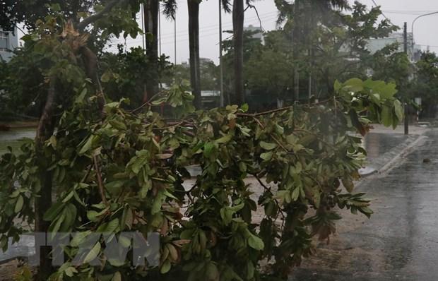 Một số cây xanh trên địa bàn thành phố Tuy Hòa, Phú Yên bị ngã đỗ. (Ảnh: Phạm Cường/TTXVN).