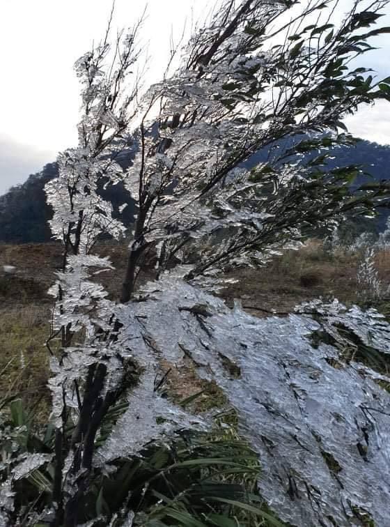 Vùng cao xứ Nghệ xuất hiện băng giá - Ảnh 3