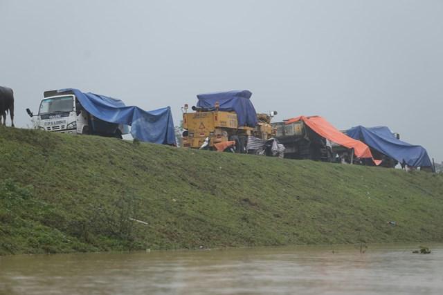 Người dân phải dựng tạm lều bạt để cho trâu bò, gia súc trú ngụ.