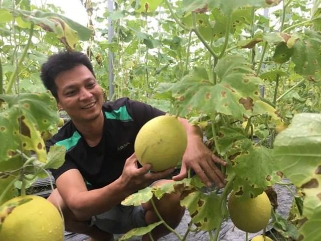 Mô hình trồng dưa lưới trong nhà kín