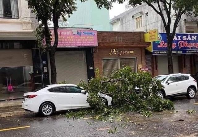 Cây cối đổ ngổn ngang giữa đường.