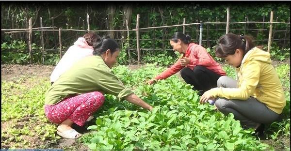 """Mô hình """"vườn rau sạch an toàn của câu lạc bộ Phụ nữ"""" khu phố 7, thị trấn Hai Riêng, huyện Sông Hinh (Phú Yên)."""