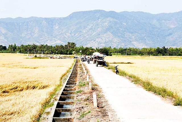 Đường bê tông nội đồng sạch sẻ, rộng rãi tại xã Diên Thạnh (huyện Diên Khánh).