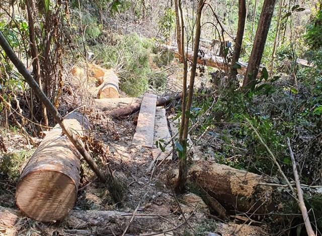 Rừng Tiểu khu 249 bị phá hoại.