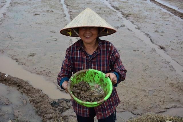 [ẢNH] Nam Định: Nông dân dầm bùn diệt 'giặc' ốc bươu vàng - Ảnh 3