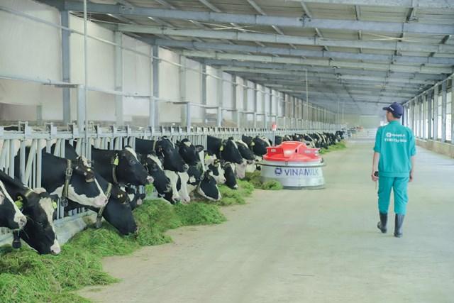 Vinamilk phát triển chăn nuôi theo hướng bền vững