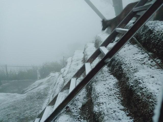 Tuyết đã rơi khá dày ở Sapa. (Nguồn: Sưu tầm)