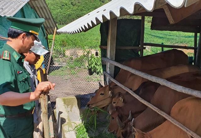 Nhờ sự hỗ trợ và hướng dẫn tận tình của cán bộ, chiến sĩ BĐBP tỉnh Thừa Thiên - Huế, gia đình anh Hồ Xuân Bảy đã vươn lên thoát nghèo bền vững.