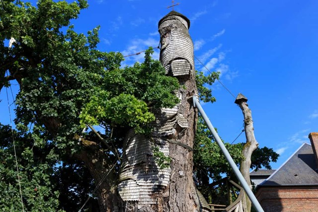 Nhà nguyện Chêne, Pháp - Nhà nguyện này nằm ở Allouville-Bellefosse, miền Bắc nước Pháp, nằm bên trong một cây sồi hàng trăm năm tuổi.