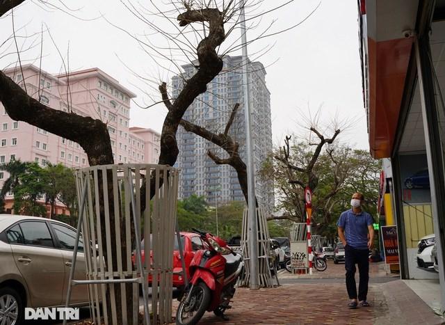"""Anh Nguyễn Thành Nam, người dân ở phường Nghĩa Đô (Cầu Giấy) chia sẻ: """"Cách đây vài tháng, tôi thấy mấy cây sưa này đã khô héo và phải truyền dịch để cứu cây. Nhưng giờ thì rụng hết lá rồi, một số cây có dấu hiệu mục nát, chết khô, trơ cành""""."""
