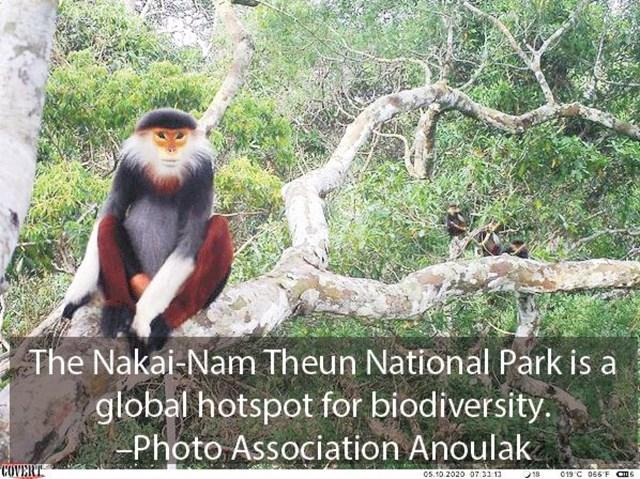 Phát hiện 36 loài động vật hoang dã có nguy cơ tuyệt chủng ở Trung Lào - Ảnh 1