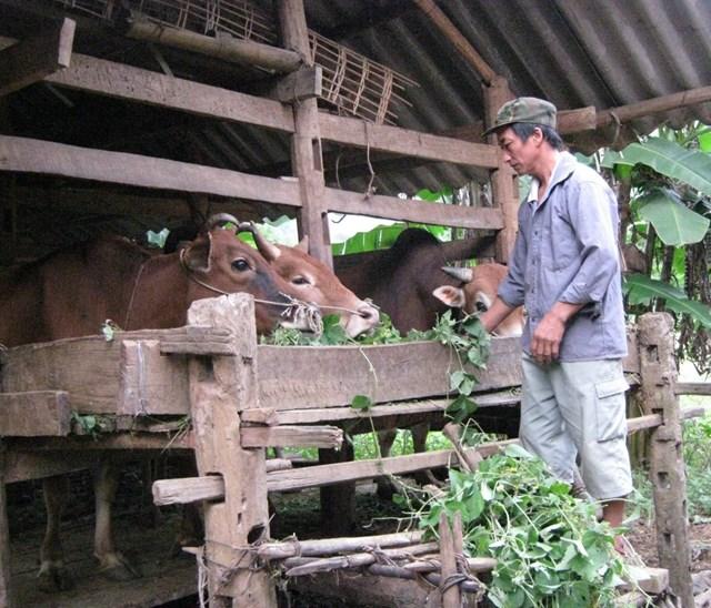 Hỗ trợ phát triển sản xuất cho người nghèo ở Cao Bằng. Ảnh: K.T.