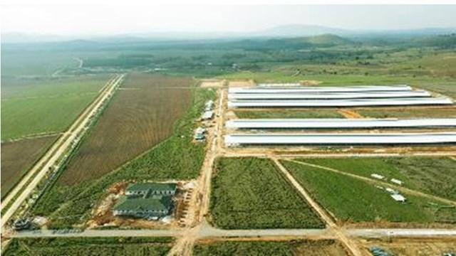 Trang trại đầu tiên trong Tổ hợp bò sữa Lao-Jagro tại Xiêng Khoảng của Vinamilk đã hoàn thành các hạng mục xây dựng cơ bản (ảnh chụp tháng 5/2021).