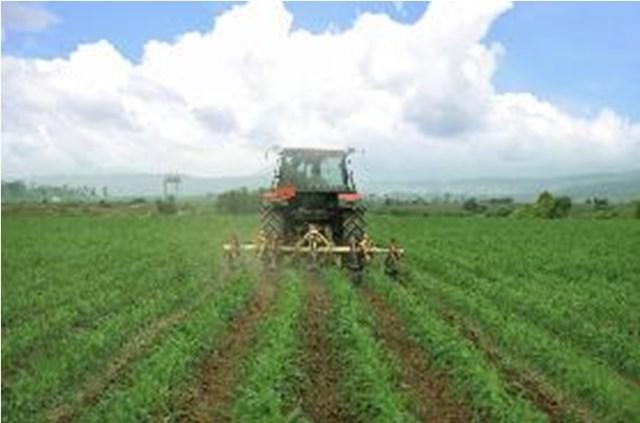 Cánh đồng yến mạch, bắp hữu cơ tại Trang trại bò sữa Lao-Jagro ở Xiêng Khoảng (Lào), ảnh chụp tháng 5/2021.