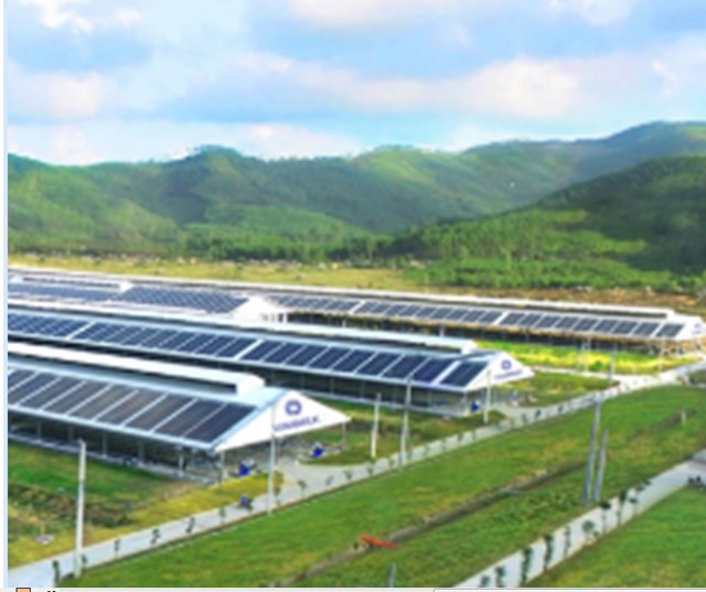 Trang trại Vinamilk Green Farm tại Quảng Ngãi có quy mô đàn bò sữa 4.000 con.