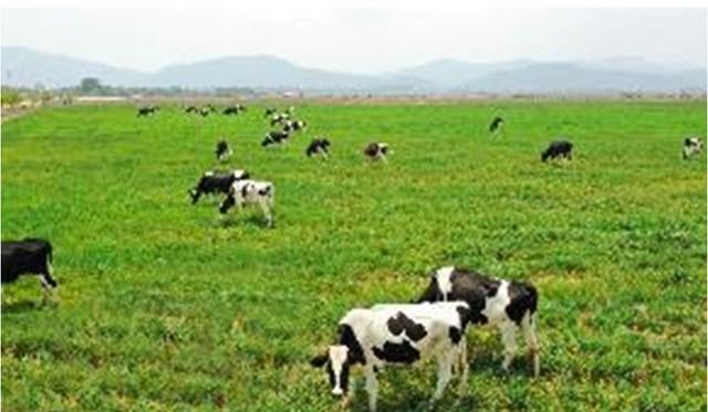 Dự án Tổ hợp trang trại Lao-Jagro có quỹ đất rộng, quy mô khi hoàn thành có thể lên đến 100.000 con.