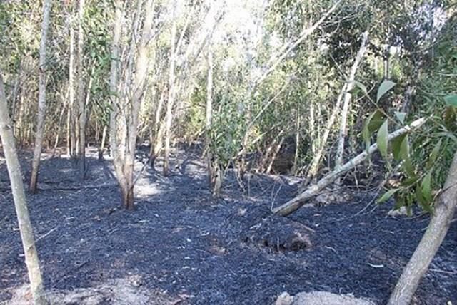 Quảng Nam: Liên tiếp xảy ra cháy rừng  - Ảnh 1