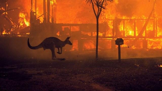 Một con kangaroo lao qua ngôi nhà đang bốc cháy ở Hồ Conjola, bang New South Wales, Australia. Năm 2020, Australia đã phải hứng chịu một đợt cháy rừng tàn khốc. Ảnh: New York Times.
