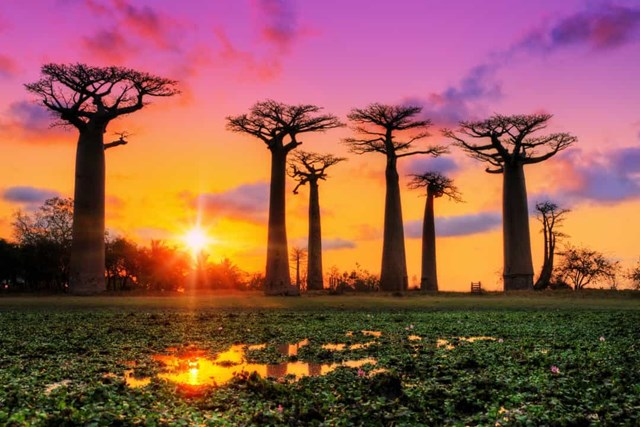 Châu Phi: Khám phá những thắng cảnh ngoạn mục - Ảnh 15