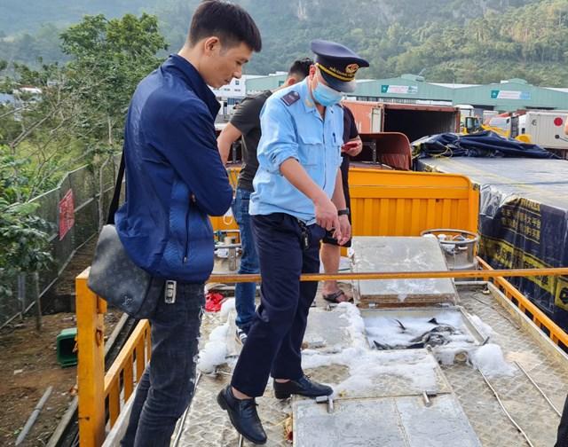 Lực lượng chức năng kiểm tra một xe cá tầm Trung Quốc thông quan qua cửa khẩu Hữu Nghị (Lạng Sơn). Ảnh: Q.L.